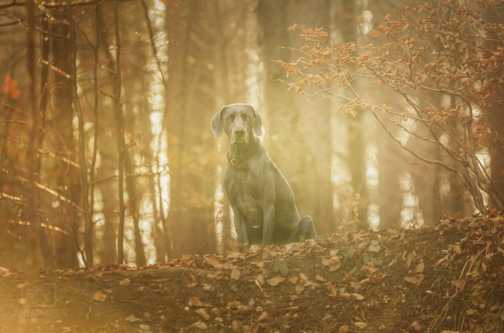 Hund sitzend im Wald von Geretsried zwischen München und Bad Tölz