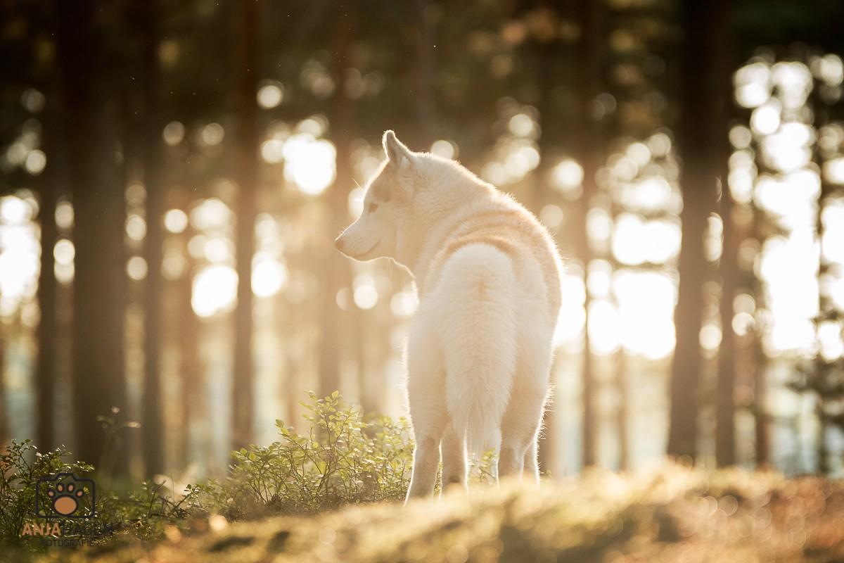 Hundefotografin_Geretsried-2